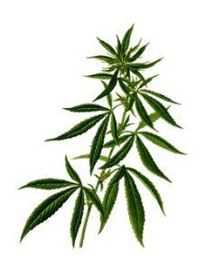 Cannabis MABEWO AG