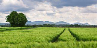 Zukunft der Landwirtschaft: Nachhaltigkeit und Künstliche Intelligenz